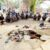 Bắt quả tang 22 đối tượng tụ tập đánh bạc tại nghĩa trang ở Tiền Giang