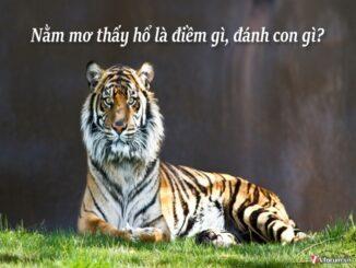 Nằm mơ thấy hổ đánh lô đề con gì? Hổ là số mấy?