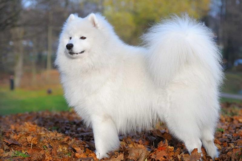 Nằm mơ thấy chó trắng đánh đề con gì? Chó trắng là số mấy?