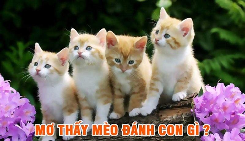 Nằm mơ thấy mèo đánh lô đề con gì? Mèo là số mấy?